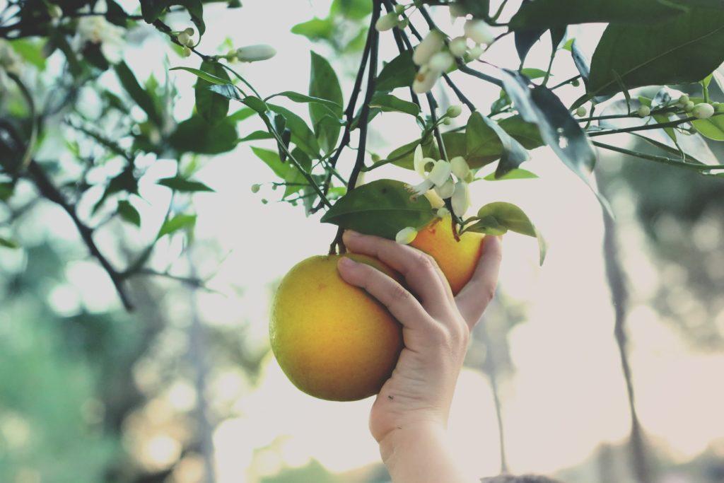 frutos